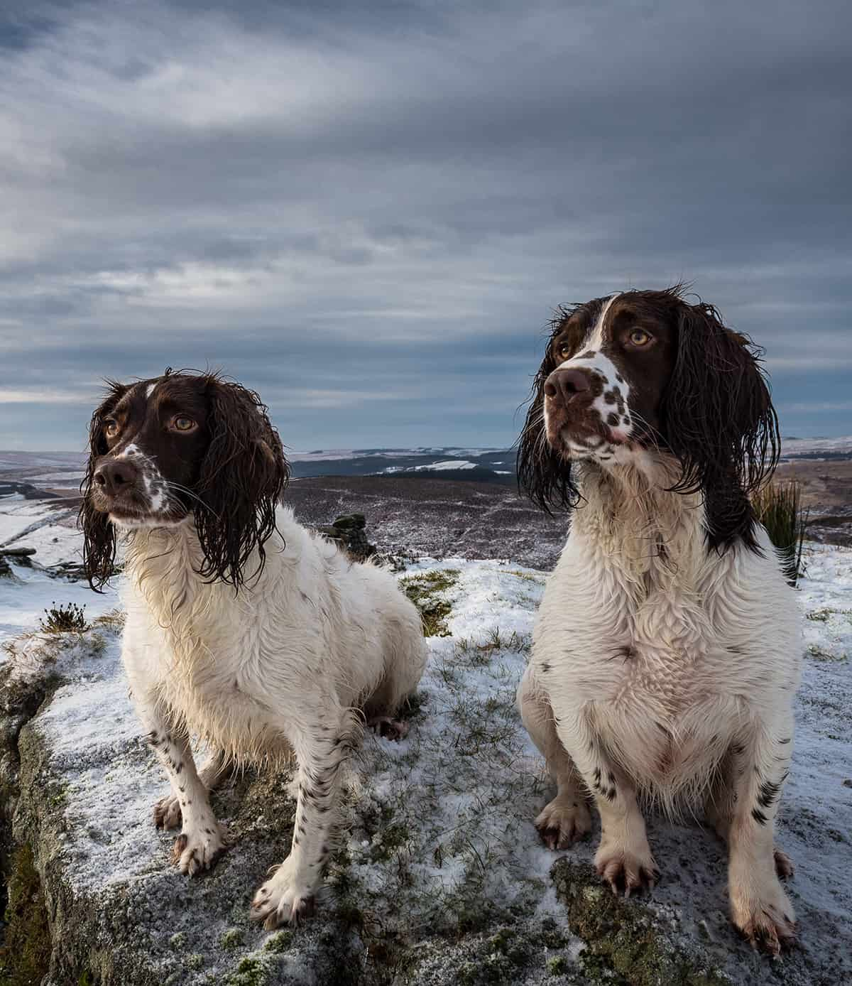 dog trainer Leamington Spa Warwick Southam Cubington Radford Semele Whitnash Stratford Upon Avon