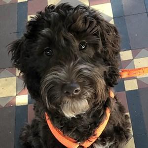 dog trainer Whitnash Stratford Upon Avon