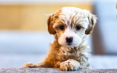 New puppy driving you to distraction? Read this