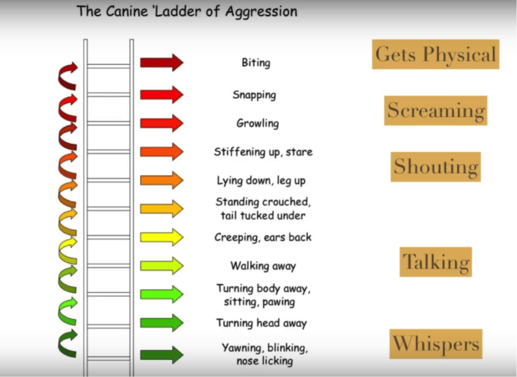ladder of aggression 1