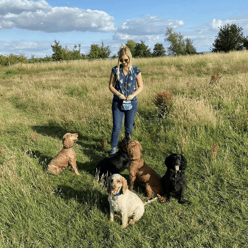 membership for dog training your crazy spaniel