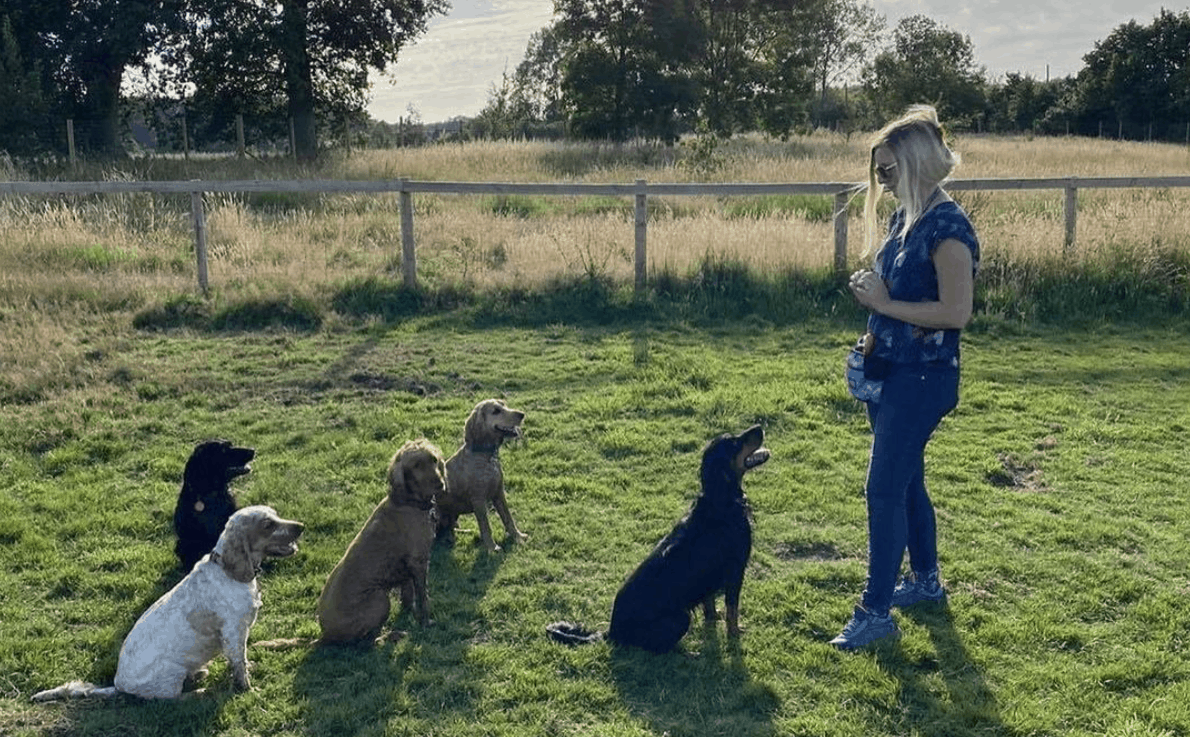 spaniel dog training membership and support with guru hannah antrobus
